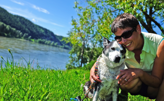 Until July 14 at 5:00pm, City Animal Control Officers will be visiting the city's dog parks and other locations frequented by animal lovers to survey residents. Interested citizens can also find an online version of the survey on the City website. A dog walker and her pup enjoyed an (on-leash) stroll along the river in Lheidli T'enneh Memorial Park.