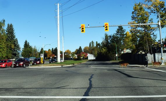 Traffic lights at Ferry Avenue and Ospika Boulevard are now operational. Bill Phillips photo