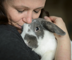 Rabbit owners warned about deadly virus