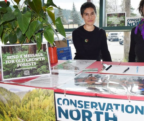 Earth Day petition calls on gov't. to save old growth forests