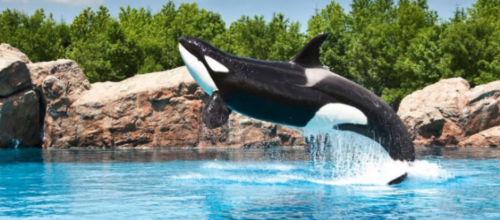 We value in zoos and aquariums – but voice support for banning whales and dolphins in captivity