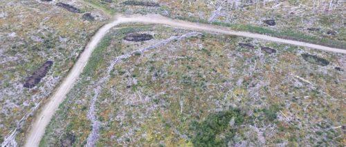 McLeod Lake/Mackenzie community forest passes audit