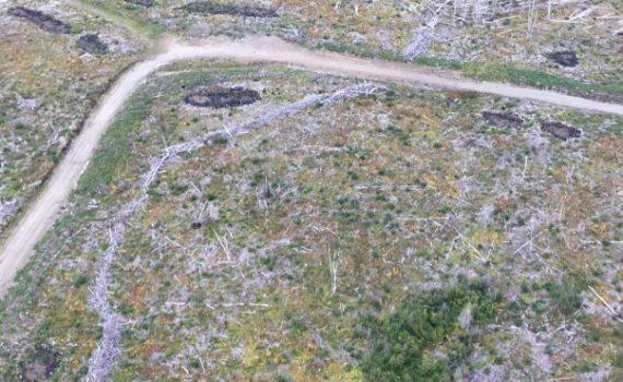 McLeod Lake harvesting in McLeod Lake/Mackenzie Community Forest-Daistaga operating area marten habitat. B.C. Forest Practices Board photo