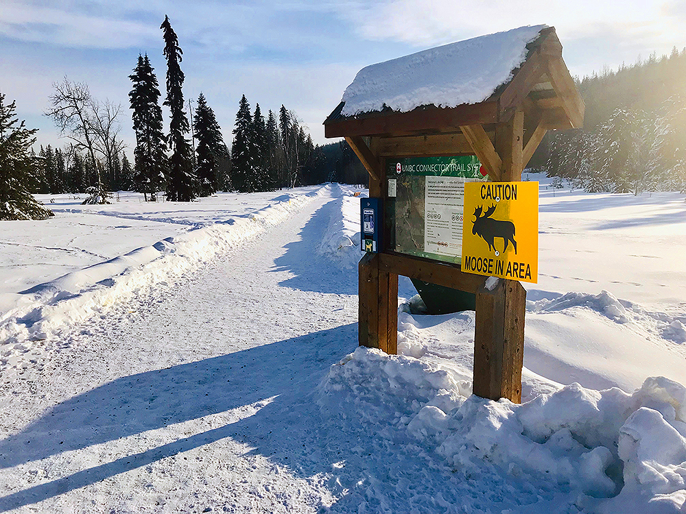 The city has installed warning signs on the trails near Ginter's Meadow as well as at the Meadow itelf to help ensure visitors are aware of an aggressive moose in the area. City of Prince George photo