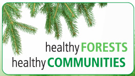Forest revitalization action plan