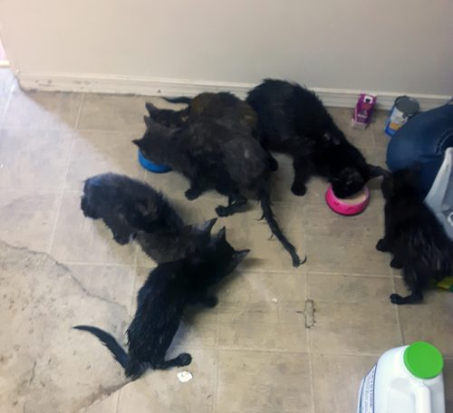Nine cats found in storage bins on vacant Prince George property